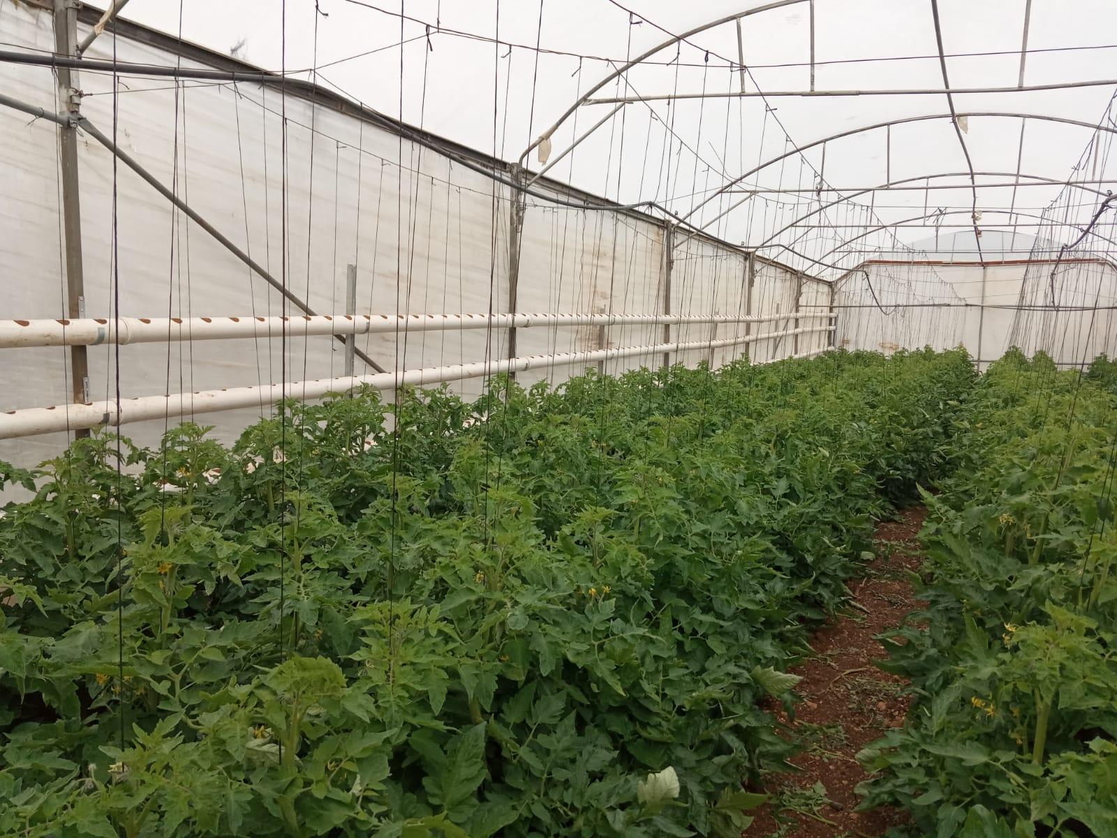 Agrícola sostenible Palestina